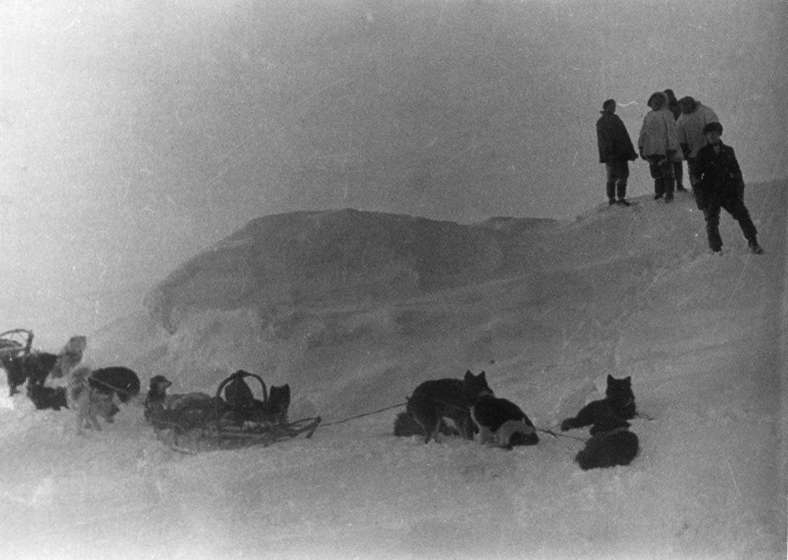 Экспонат #52. «Челюскин». «Собачий переход». 1933 год