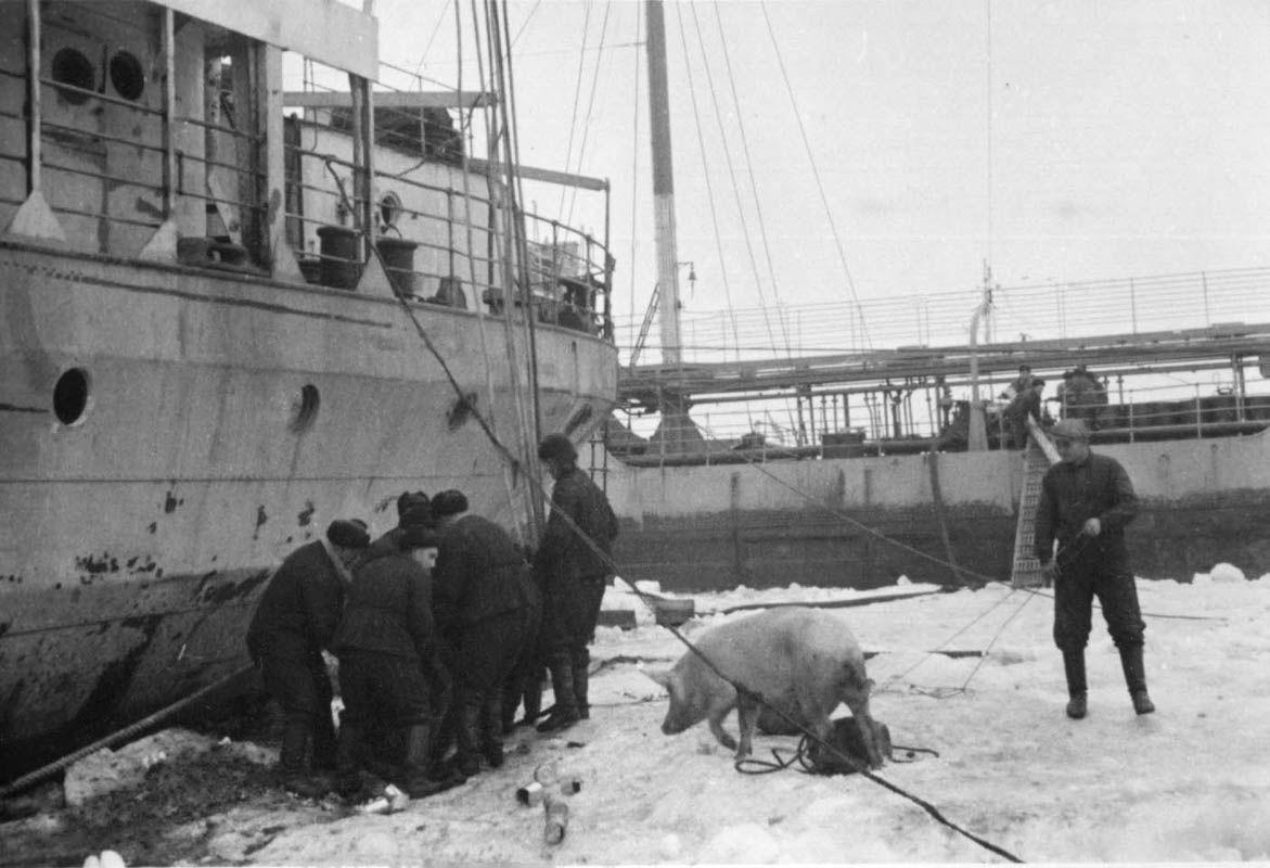 Экспонат #63. Секретная экспедиция: ЭОН-3, Арктика. 1936 год