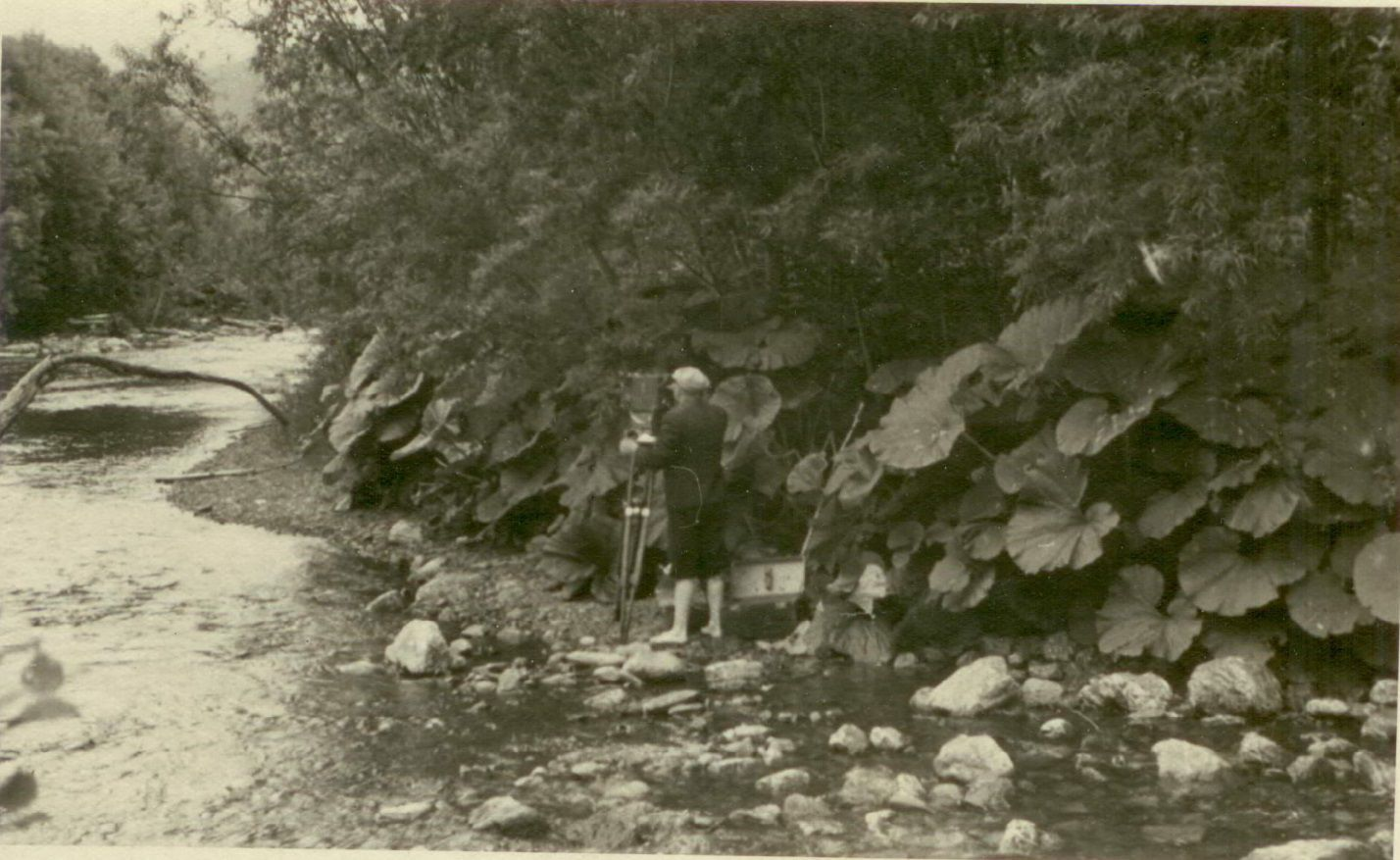 Курилы. 1953 год