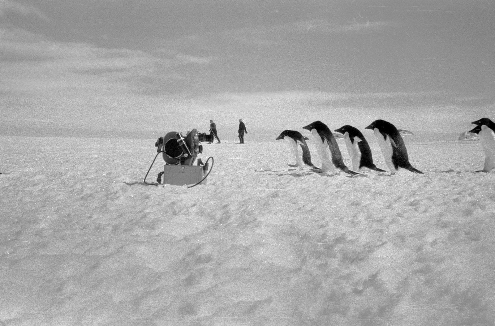 Экспонат #159. Антарктида (1961 — 1962)